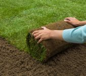 Sod Installation Services